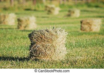 Grass Hay Bales