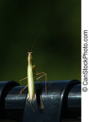 Grass hopper on bench