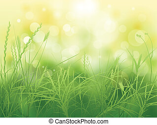 grass - nature background with green grass