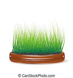 grass in a clay pot