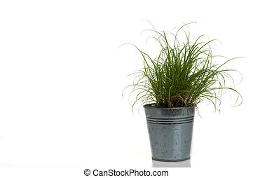 grass in a pot on white