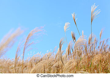 grass in autumn