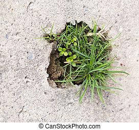 grass in concrete