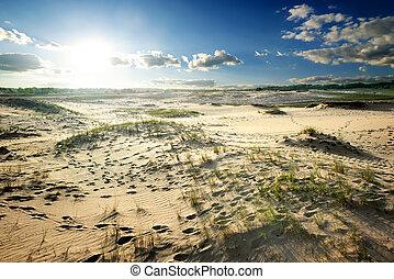 Grass in desert