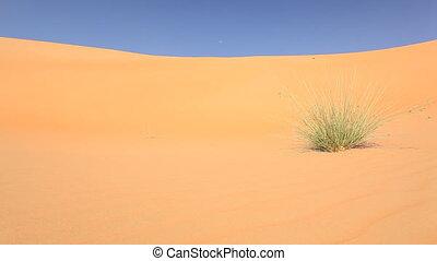 grass in desert.mov