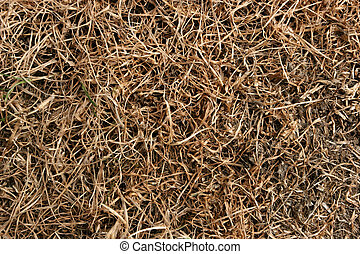 Close up of brown dry grass in a summer drought. (*inspectors note*) Also good image of lawn grub damage