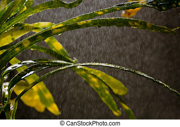 grass in garden for rain
