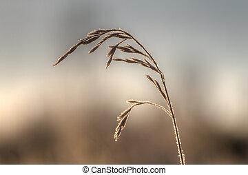 grass in hoarfrost closeup