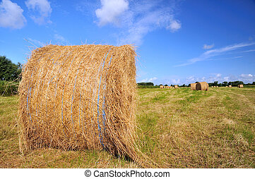 Grass in landscape