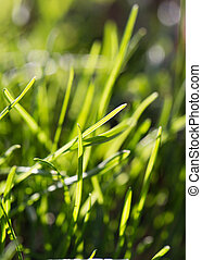 grass in nature
