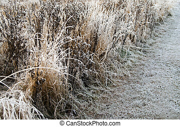 Grass in rime frost