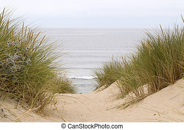 dunes - Grass in sand dunes in front of the beach and sea