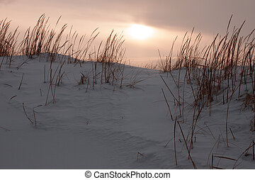 Grass in snow dunes at sunset
