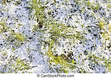 Grass in snow.