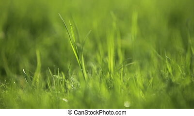 grass in spring backlit
