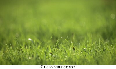 grass in spring backlit