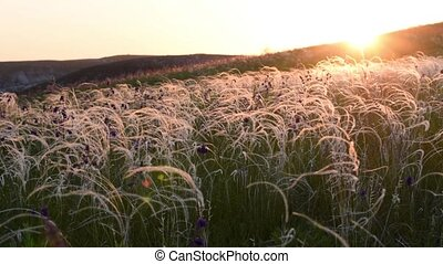 Grass in steppe swaying on wind