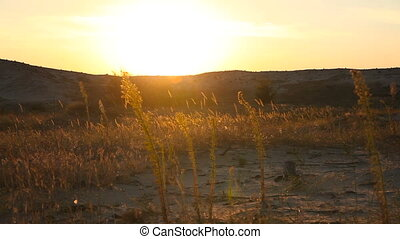 Grass in the desert at sunset