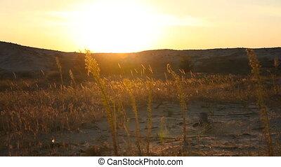 Grass in the desert at sunset