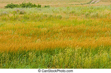 Grass in the desert on the nature