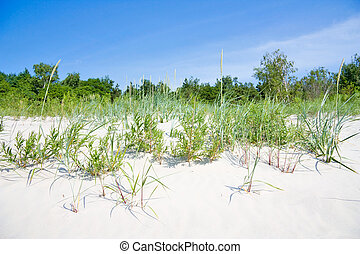 grass in the dunes