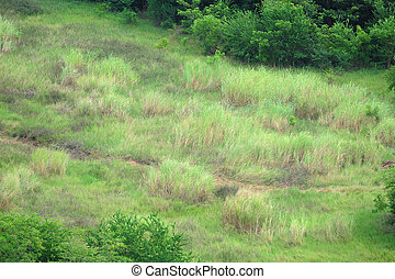 Grass in the forest