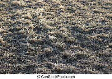 Grass in the frost 2