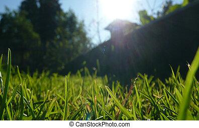 Grass in the garden