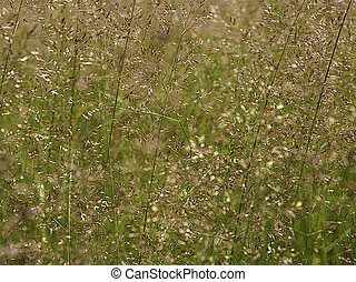 Grass in the meadow on a Sunny summer day