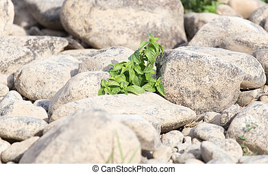 grass in the outdoors rocks