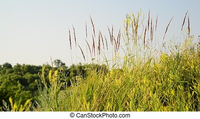 Grass in the steppe close-up - A Grass in the steppe...