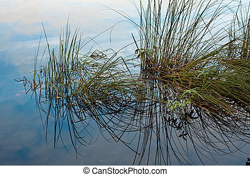 Grass in the water.