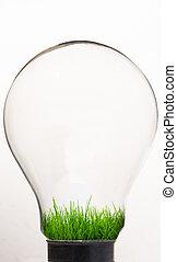 Grass inside light bulb