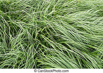 Grass is moving in the wind - abstract background