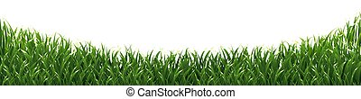Grass Isolated Background
