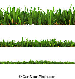 grass isolated on the white background