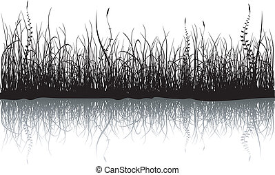 Grass - isolated on white - Black grass isolated on white