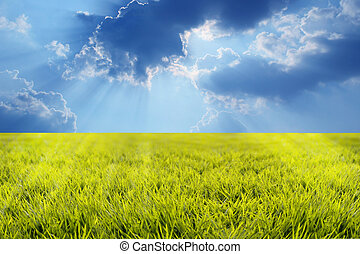 Grassland with lush growth of grass with morning sunbeams and beautiful sky