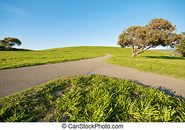 Grass Landscape and blue sky in summer
