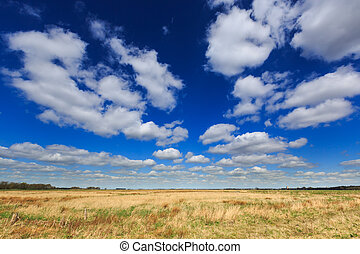 Grass landscape with beautiful cloudscape