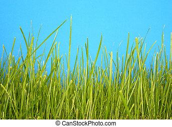 grass macro #2