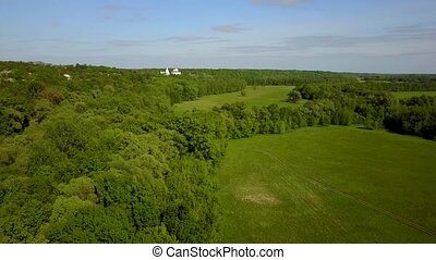Grass meadow among forest at summer sunny day. Aerial view