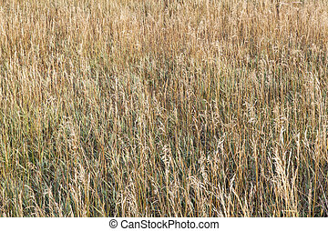 grass meadow in late summer