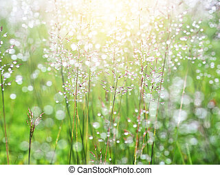 grass meadow with water drops after raining
