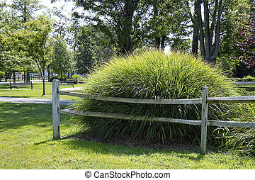 Grass Mound - High mound of tall grasses