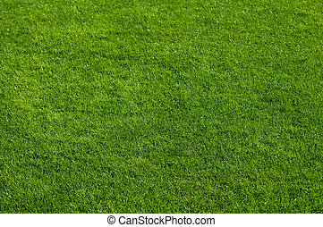 Natural green grass with morning sun