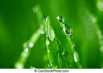 grass nature background - water drops on grass blade nature ...