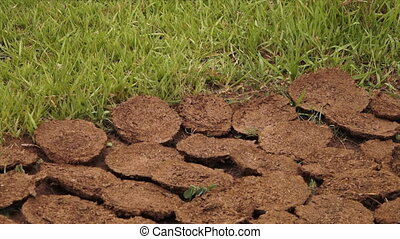 Grass near circle earth shavings - A steady, medium shot of...