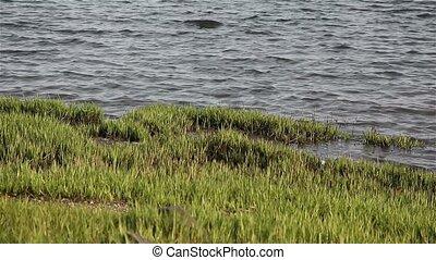 Grass near ocean