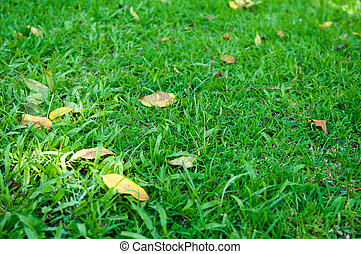 grass of natural background